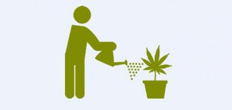 Un fallo que abre una puerta hacia la legalización del autocultivo de marihuana