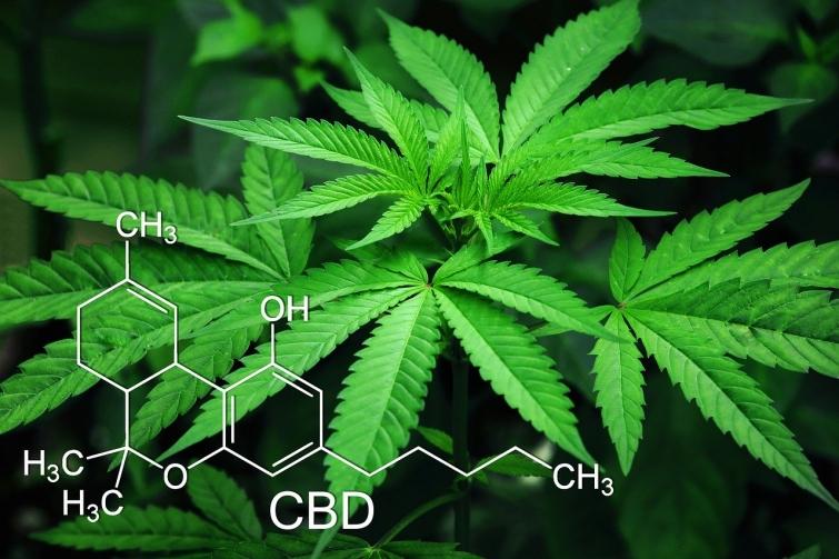 Jornada de regulación del cannabis