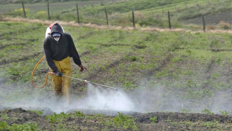 Pocos avances en la causa por agroquímicos en verduras