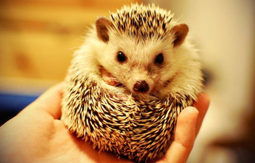Situación, cuidado y legalidades del cuidado de animales exóticos en Santa Fe y Argentina