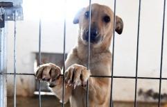 Abogados se interiorizan sobre maltrato animal
