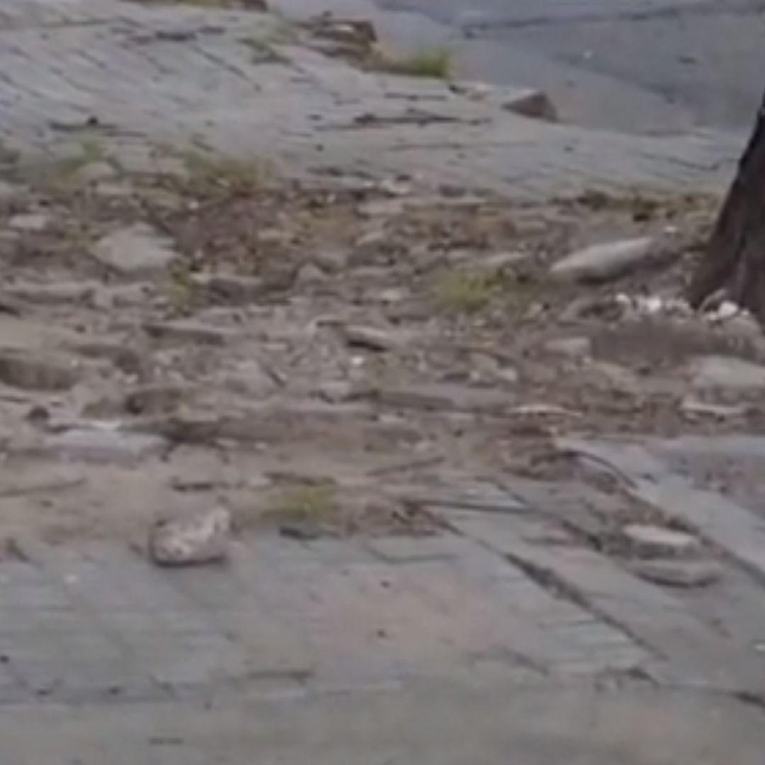 Condenaron a la Municipalidad de Rosario a pagar más de 900.000 pesos por una vereda rota