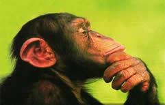Insolito, presentan una demanda legal para que reconozcan los derechos de los chimpancés.