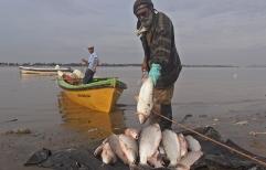 La Justicia de Rosario decidió la veda total de pesca comercial y deportiva en el cauce santafesino del río Paraná hasta el 31 de marzo