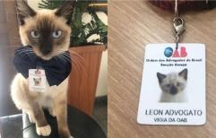 La Orden de abogados de Brasil contrató un gato