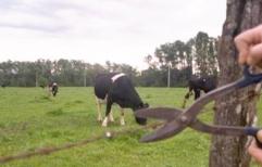 Ordenaron la prisión preventiva para dos hombres por el robo de ganado de un campo en Los Amores