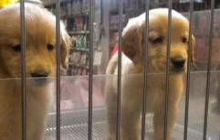 Un proyecto de ley porteño que está por aprobarse prohíbe la exhibición de animales en las vidrieras. En Santa Fe el Concejo aprobó una ordenanza similar en 2018.